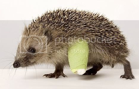 This weeks theme is NOT: hedgehogs, first aid, or Beatrix Potter characters.